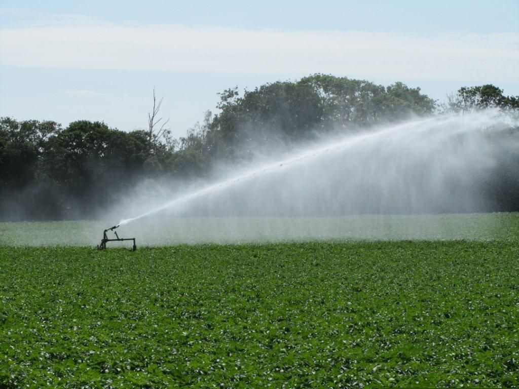Irrigation Pot